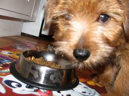 Popularity of Blue Buffalo in the Dog Food Market