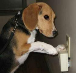 How Bed Bug Sniffing Dogs Helps In Treating Bed Bugs