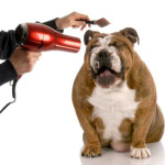 Effective Tips for Dog Grooming That Will Keep Your Pet Happy
