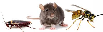 Different kinds of pest control services that one can hire