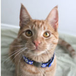 Advantages of reflective cat collars