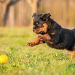 Tips On How To Train Your Puppy