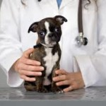 Caring for your pets best with top vet services