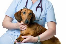 Quick tips for choosing the best animal hospital