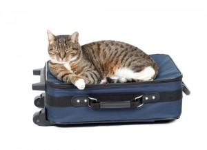 Taking A Trip By Automobile With Your Cat