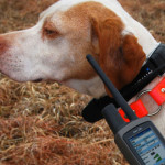 GPS Pet Trackers Helps To Keep Track Every Move Of Your Pet