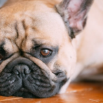 Tips for Avoiding Possible Health Troubles of your Dog