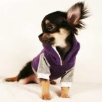 Keep your Dog Safe from Extreme Winter with Chihuahua Sweaters