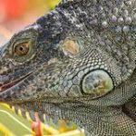 Things To Consider Before Adopting Pet Reptiles