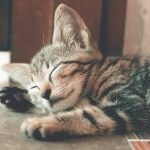 Effective Tips and Tricks to Train Your Kitten